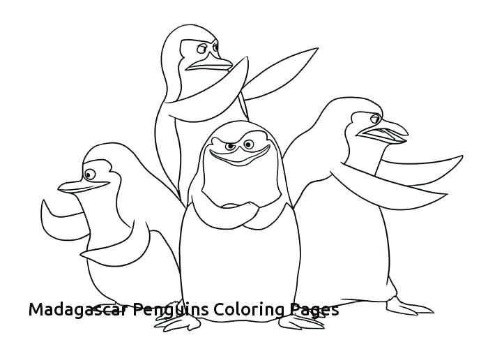 700x500 Penguin Coloring Pages Penguin Coloring Pages Free Download