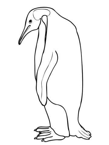 360x480 Emperor Penguin Coloring Page Free Printable Coloring Pages
