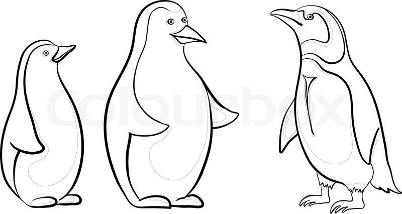 800x426 Antarctic Emperor Penguins, Black Contours On White Background