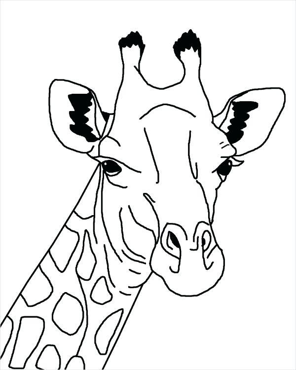 600x750 Giraffe Drawing Giraffe Outline Drawing Giraffe Drawing Face Affan