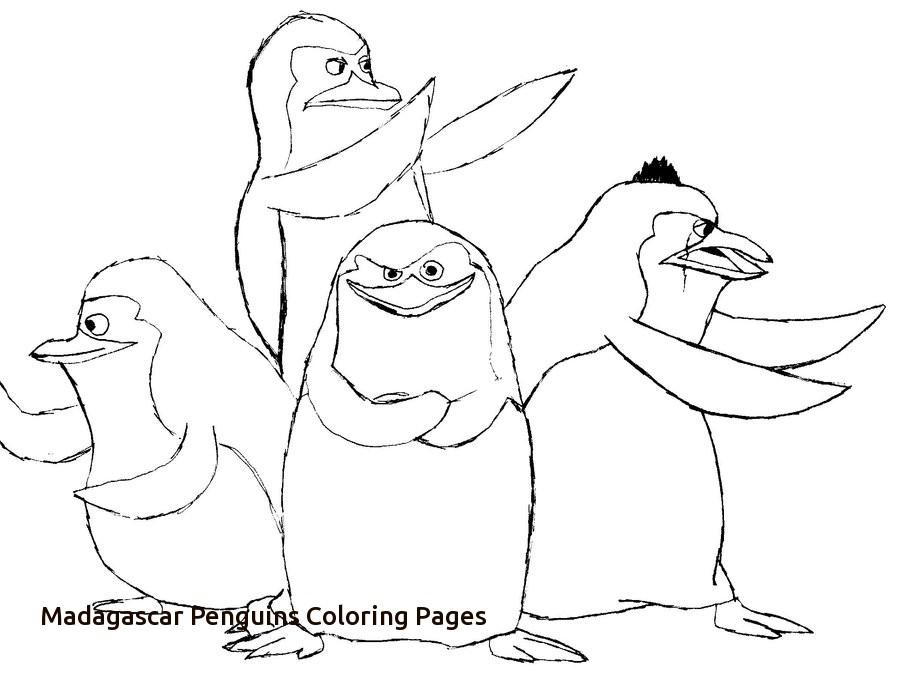 900x673 Penguins Madagascar Coloring Book Madagascar Penguin Artwork