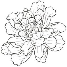 236x236 Peony Flower Line Drawing Sketch Coloring Page
