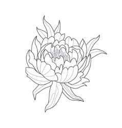238x250 Peony Flower Monochrome Drawing For Coloring Book Vector Peony