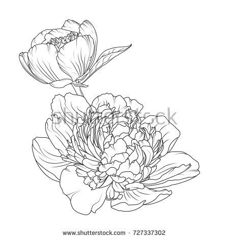 450x470 Peony Rose Blooming Garden Flowers Detailed Outline Sketch Drawing