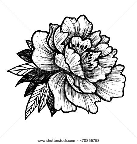 450x470 Pianese Flower Drawing Elegant Hand Drawn Vector Illustration