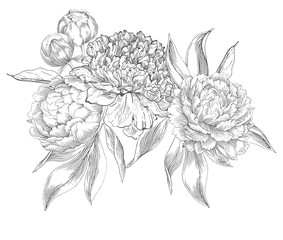 283x240 Search Photos Peony