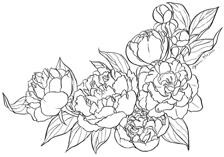 736x517 Cherry Blossom On Peonies, Cherry Blossom Drawing