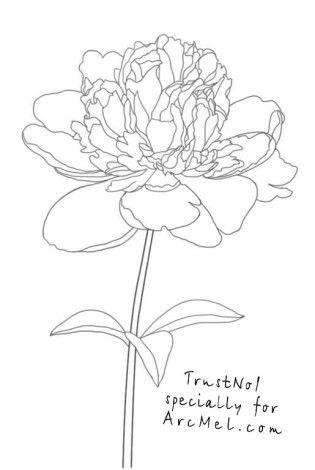 315x470 How To Draw A Peony Flower My Web Value
