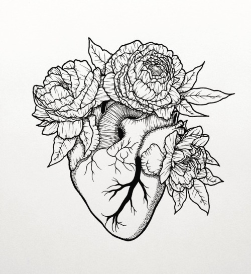 500x545 Peonies Drawing Tumblr