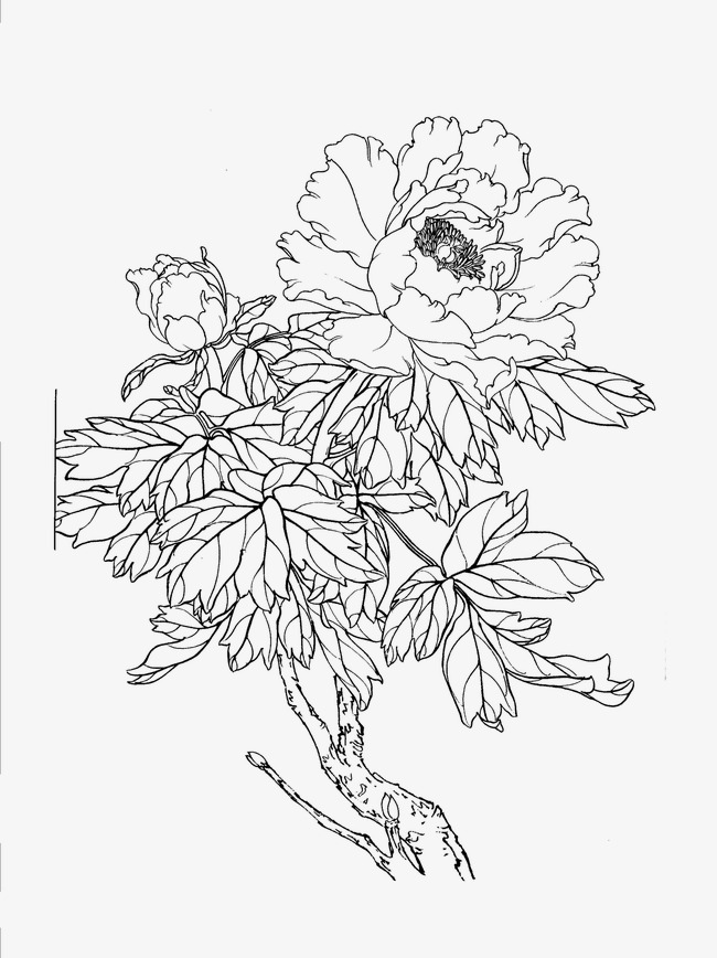 650x868 Peony, Flower Artwork, Line Drawing Png Image For Free Download