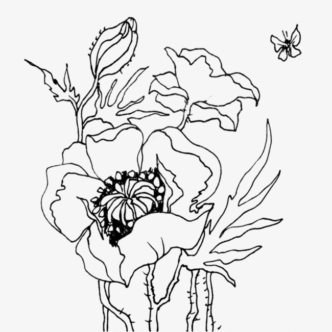 650x651 Hand Painted Peony Line Drawing, Hand Painted, Line Drawing, Peony