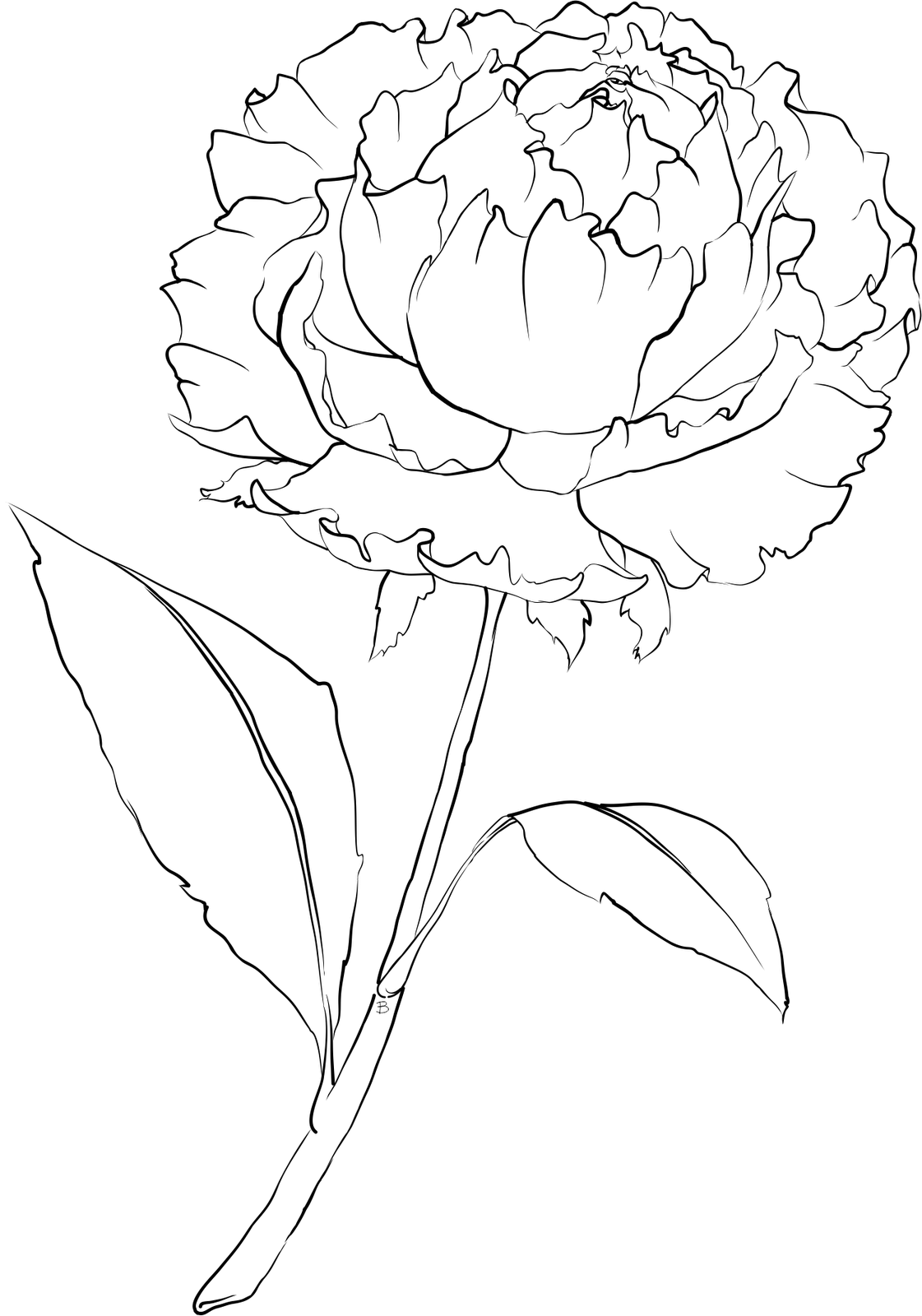 1121x1600 Peony Drawing Png Lovely Beccy S Place Peony Flower ~