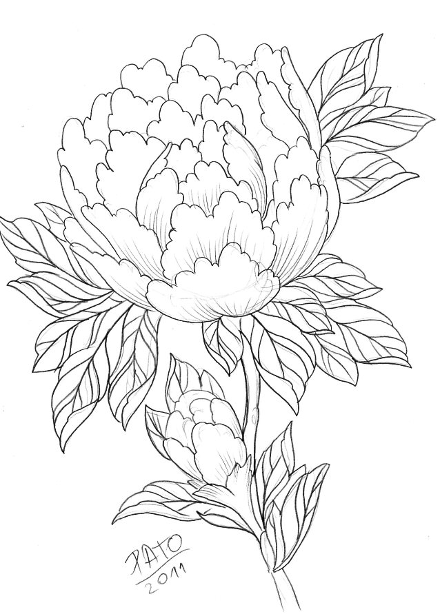 Peony Line Drawing at GetDrawings