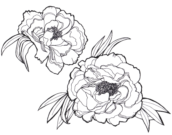 peony line drawing at getdrawings com free for personal use peony