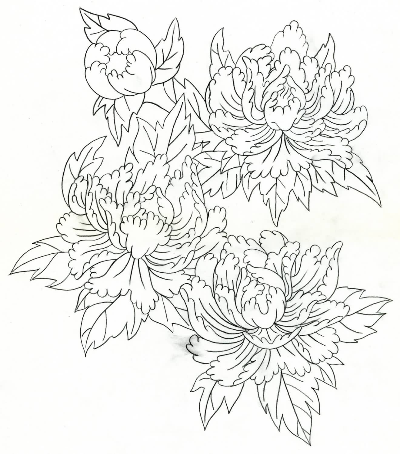 Peony Outline Drawing