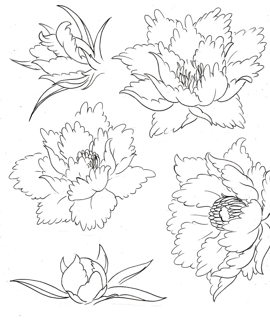 900x1070 Peony Flower Tattoos By ~metacharis On Tattoo Time