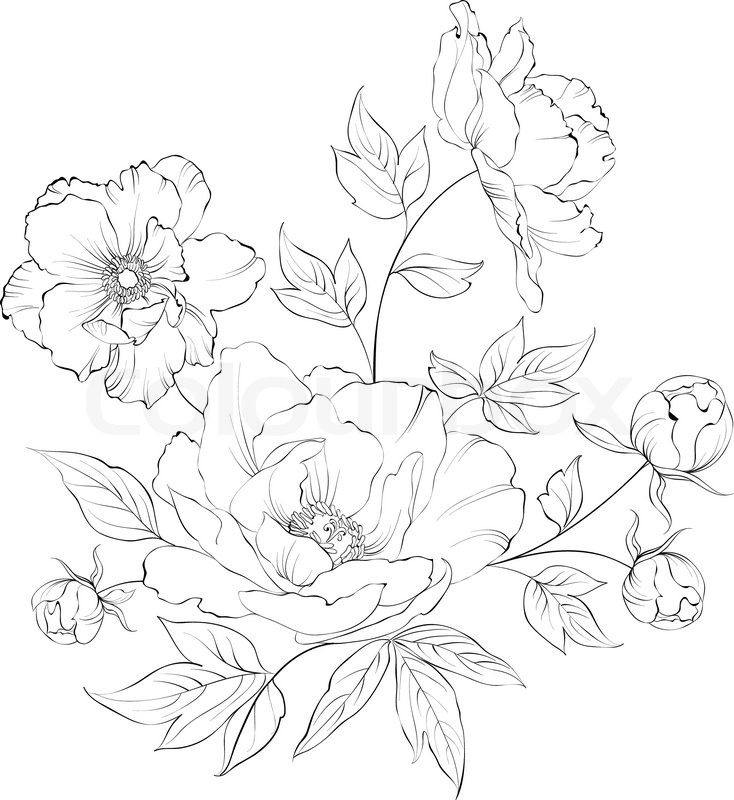 734x800 Peony Clipart Sketch