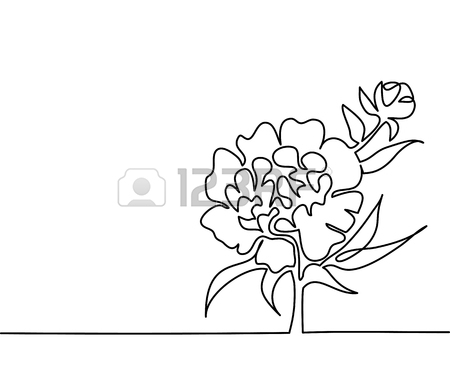 450x375 Beautiful Soft Color Pink Peony Flowers. Continuous Line Drawing
