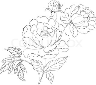 320x282 Drawing Of A Peony Drawings Drawings Of, Peonies