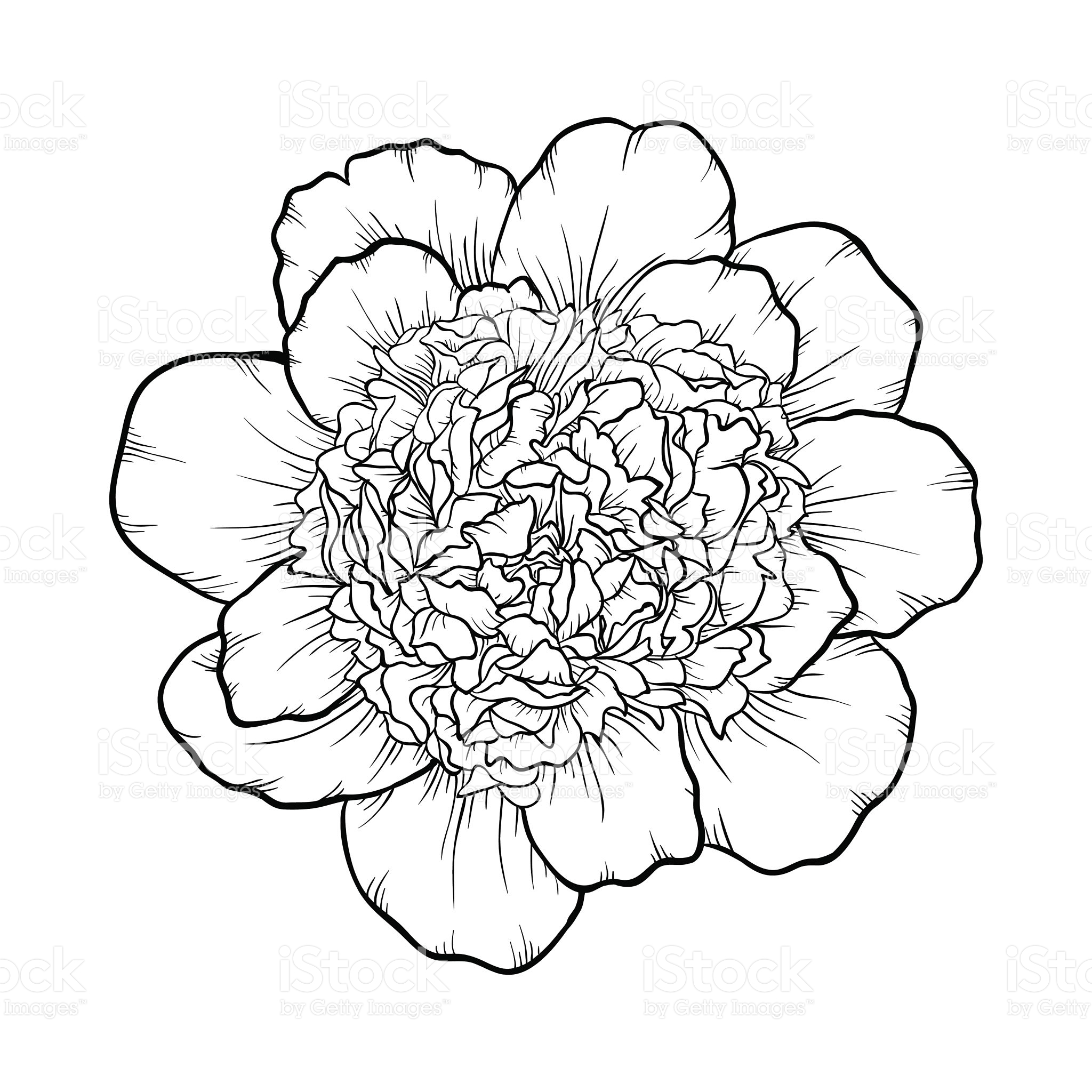 2048x2048 Beautiful Monochrome Black And White Peony Isolated On Background