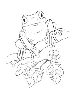 309x400 Frog For Coloring Cartoon Frog Coloring Pages Cartoon Coloring