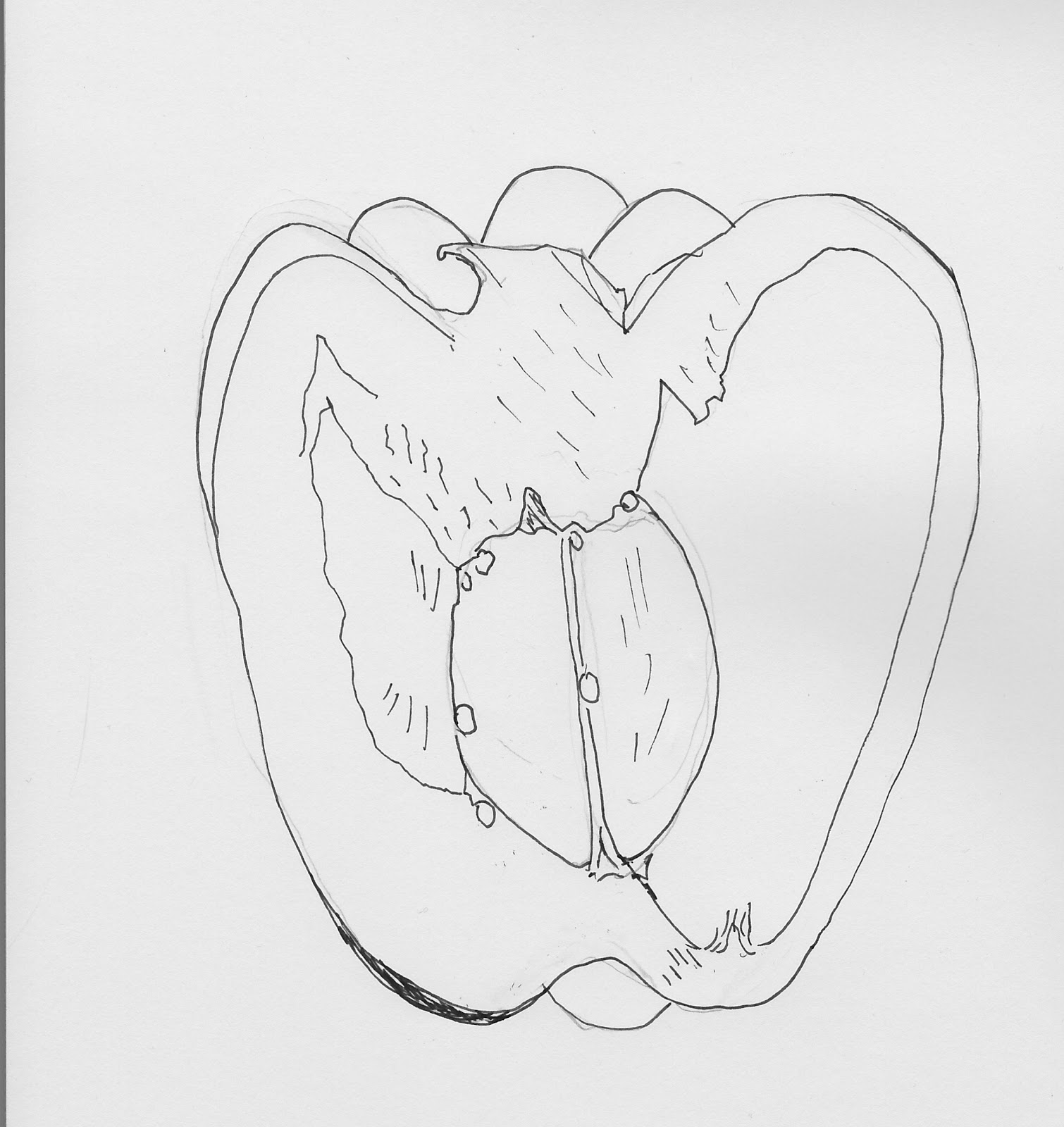 1510x1600 Learning To Draw Line Drawing Green Pepper