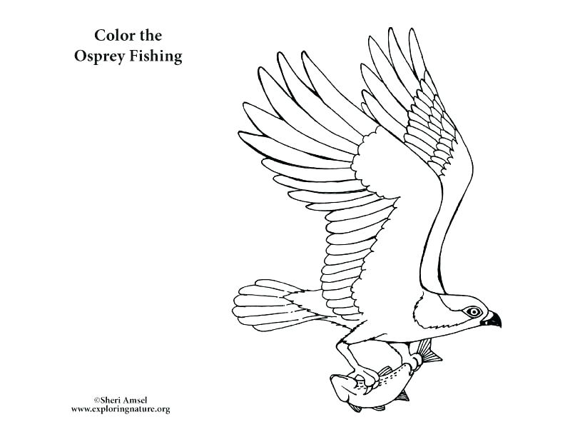 792x612 Free Coloring Pages Of Birds Coloring Pages Of Birds Realistic