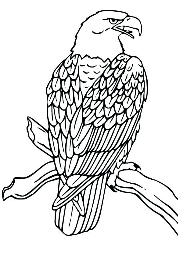 600x879 Fresh Bald Eagle Coloring Page Fee Head Pages And Drawing