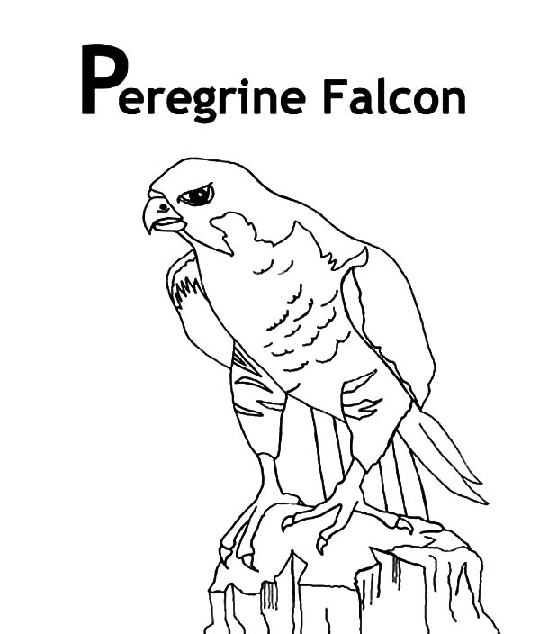 600x704 Peregrine Falcon Bird Coloring Pages