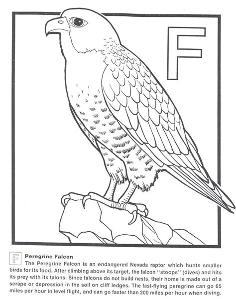 474x600 Peregrine Falcon Bird Coloring Pages