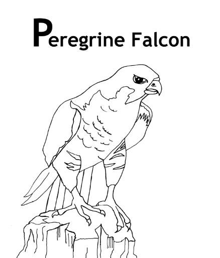 438x514 peregrine falcon coloring pages