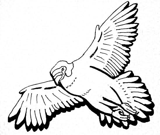 548x461 Peregrine Falcon Design By Michelle Ristuccia