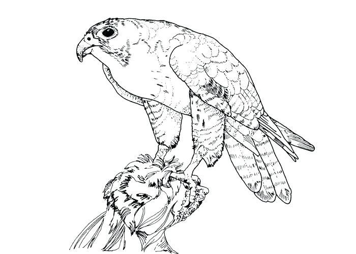 700x500 predator coloring pages pin peregrine falcon coloring 4 alien vs