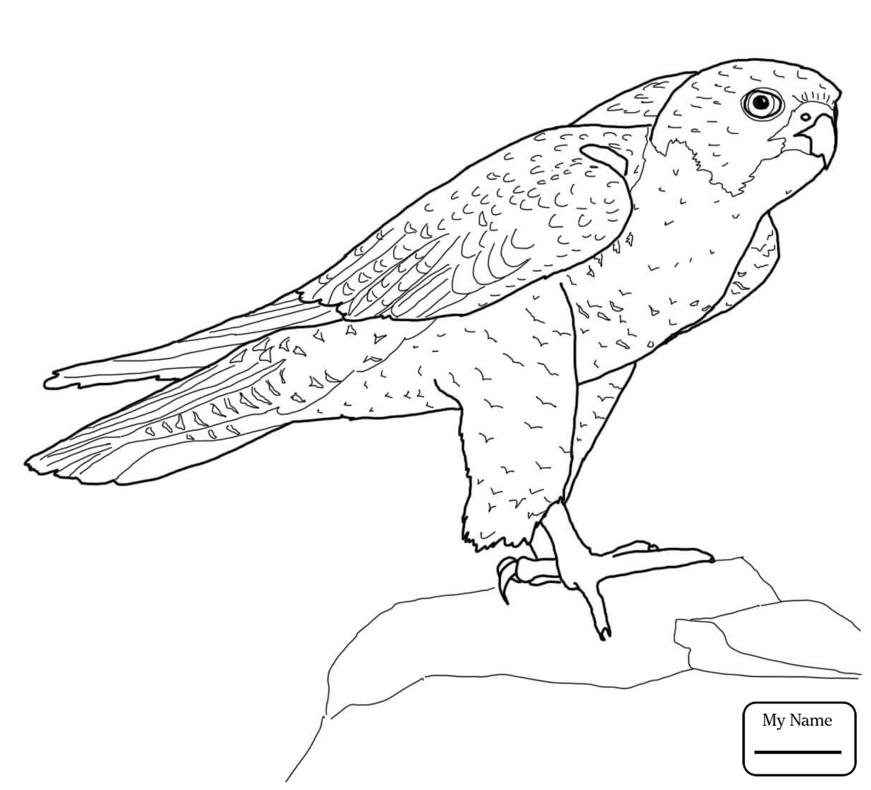 1224x1110 Coloring Pages For Kids Birds Peregrine Falcon Falcons