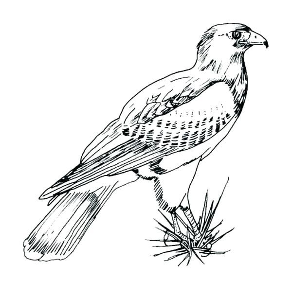 600x613 Peregrine Falcon Coloring Page