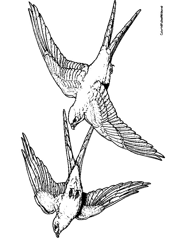 Peregrine Falcon Drawing at GetDrawings | Free download