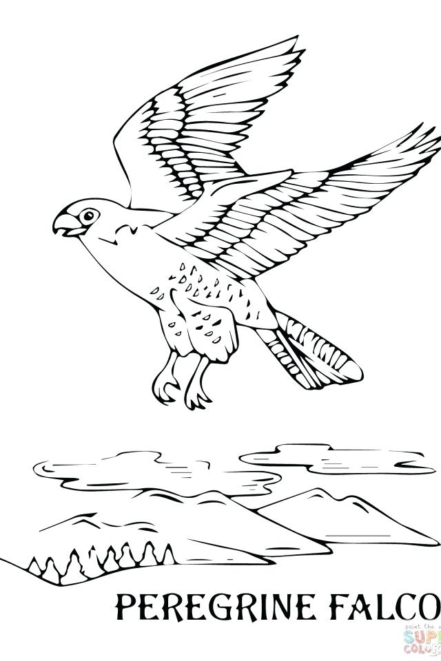 640x960 Falcon Animal Coloring Pages Peregrine Falcon Flying Coloring