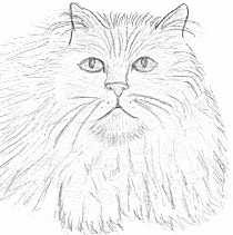 210x211 animal coloring persian cats coloring pages coloring pages online