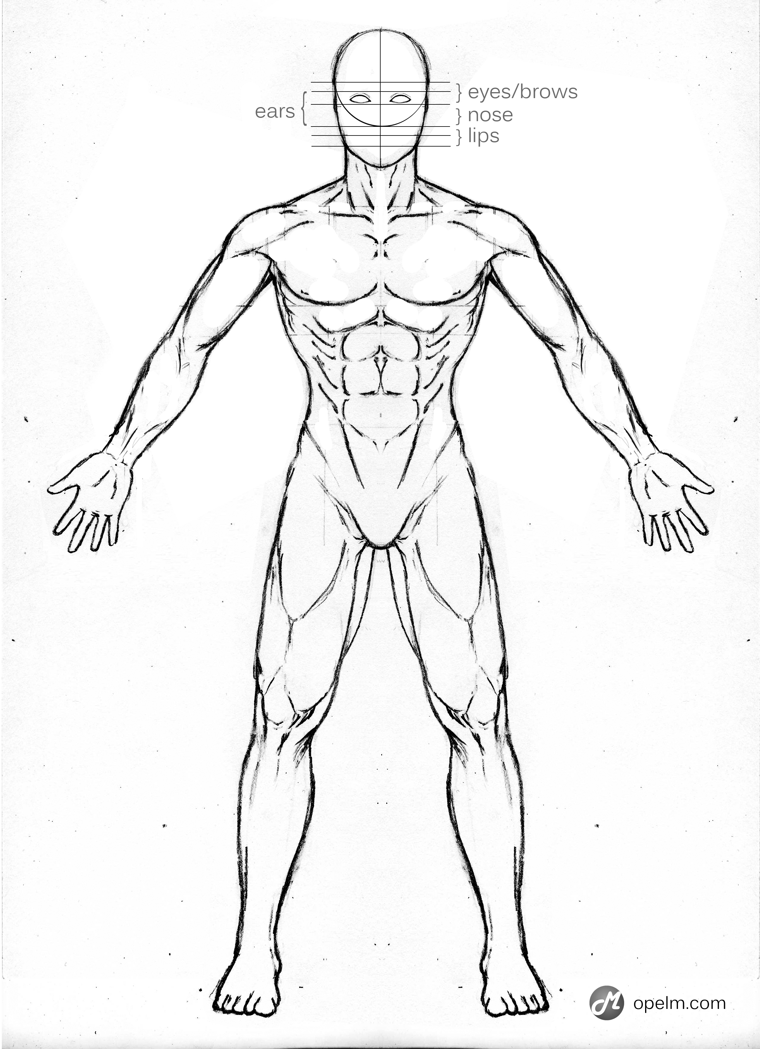 2540x3507 Male Anatomy Drawing Model