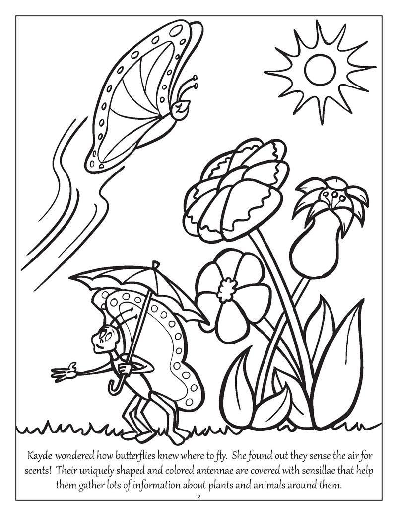 800x1038 Coloring Books Personalized Big, Bright Butterflies And Birds