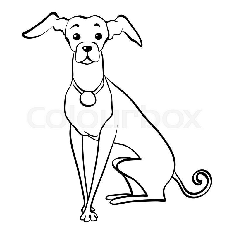 800x800 Sketch Funny Dog Italian Greyhound Breed Sitting Hand Drawing