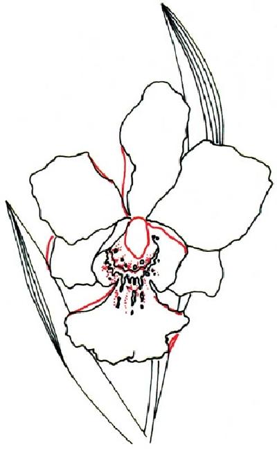 Petal Drawing
