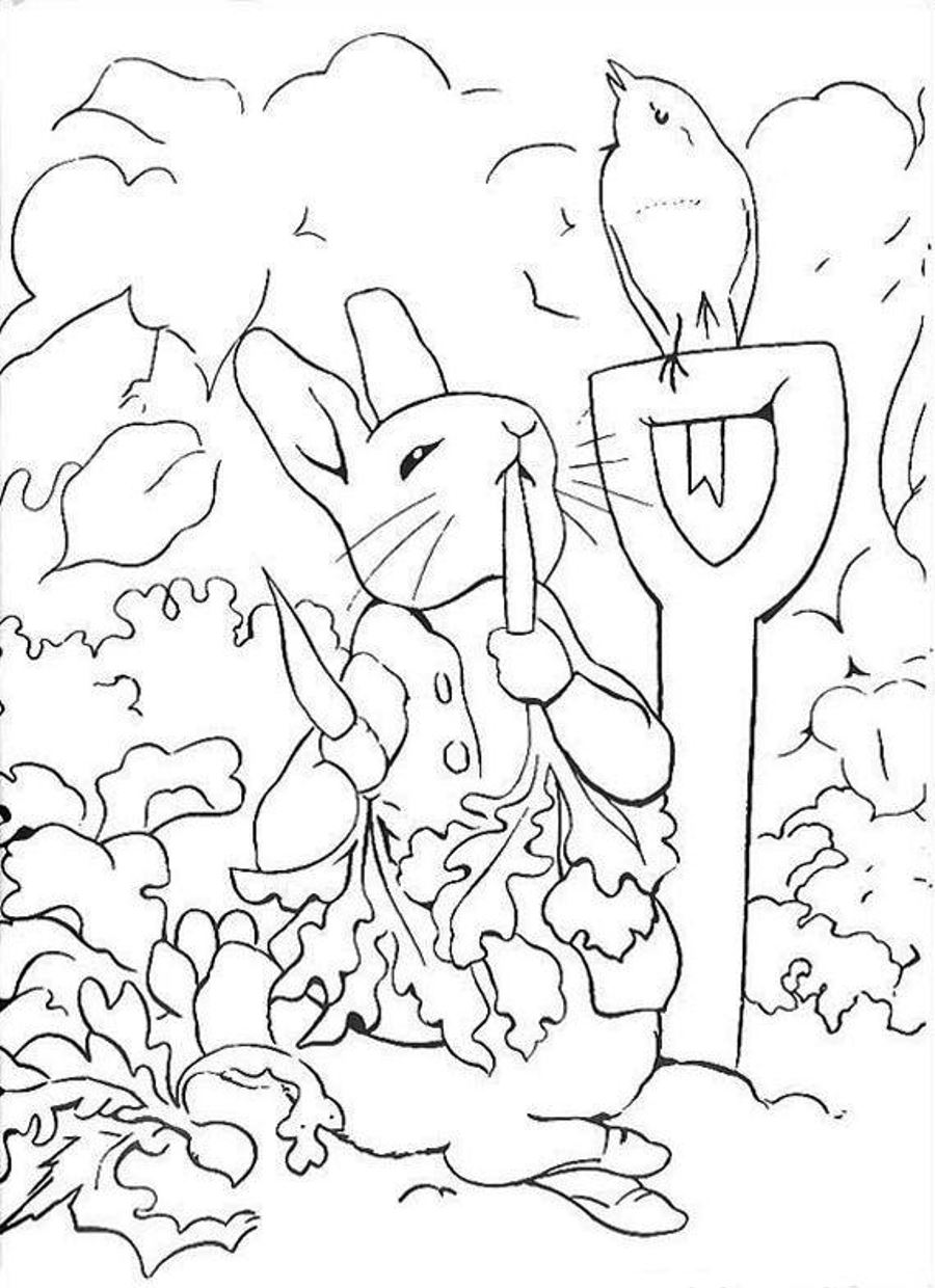 900x1240 Peter Rabbit Coloring Pages Theotix Me In