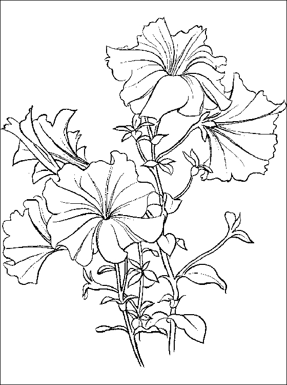 560x750 Coloring Page Fir Petunia Petunia Coloring And Printable Page