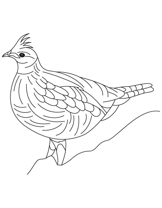 630x810 Grouse Animal Coloring Pages Ruffedgrousedrawings Ruffed Grouse