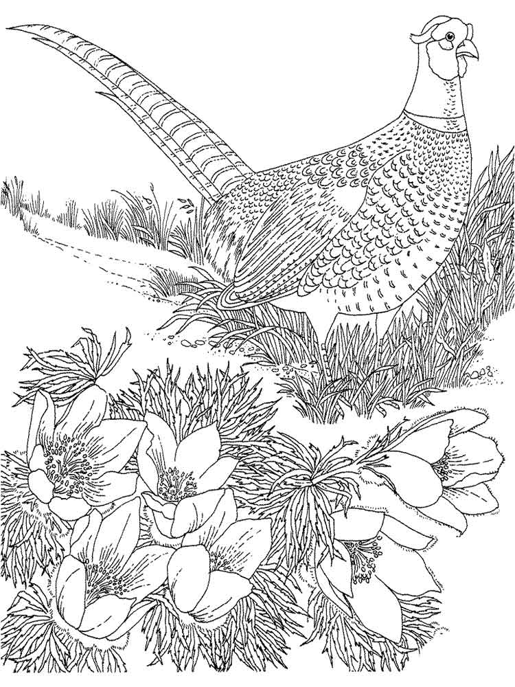750x1000 Pheasant Animal Coloring Pages