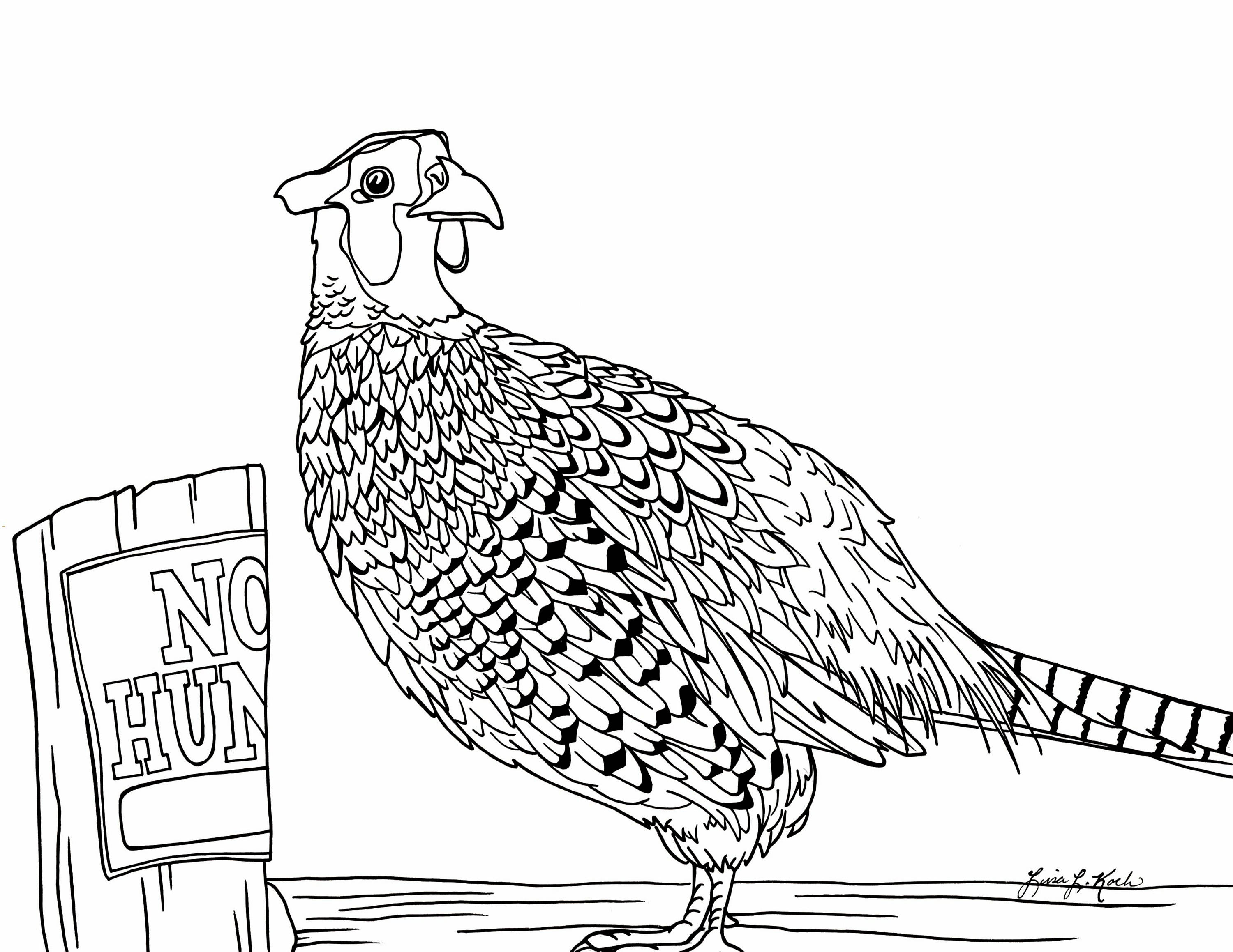 3000x2318 Ring Necked Pheasant Coloring Page