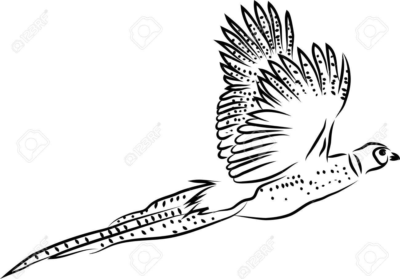 1300x906 Ring Necked Pheasant Flying Royalty Free Cliparts, Vectors,
