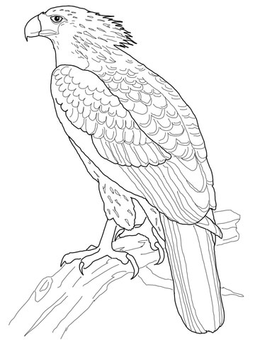 360x480 Philippine Eagle Coloring Page Free Printable Coloring Pages