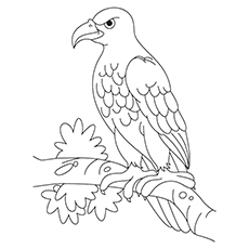 Philippine Eagle Drawing